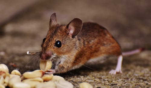 Tips For Selecting Sucessful Pest Control Services Edinburgh 2
